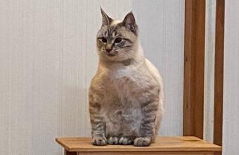 猫さんその座り方、置き物感が強いです…個性ある「体育座り猫」発見