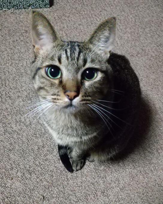 猫のココァくん