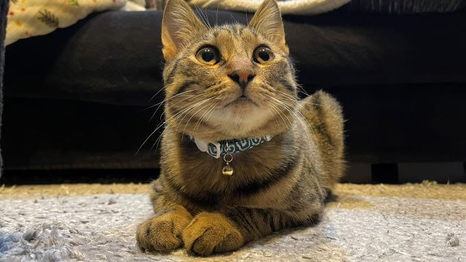 猫の琥珀くん