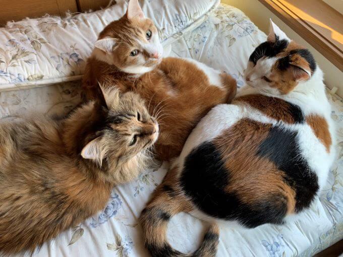 保護猫のトリオ