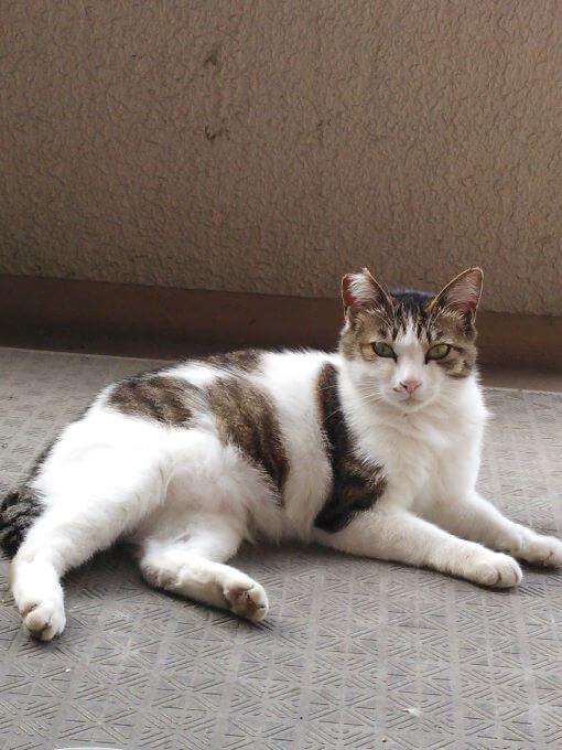 猫のにぃちゃん