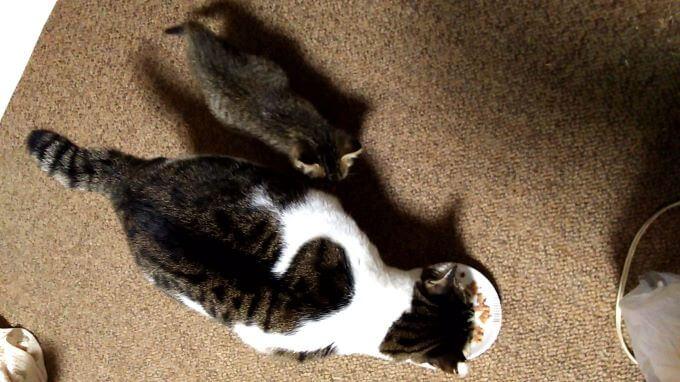 猫のにぃちゃんとココァくん