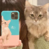 【べったり猫さん】メイクを妨害するほどの甘えん坊ぶりが天使の可愛さ~