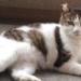 【保護猫さん物語】毎日遊びにくる「お訪ねノラにゃんこ」今では大切な家族に