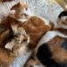 【保護猫トリオ】犬派だったのに~個性ある3猫さんのおかげでメロメロ生活邁進中