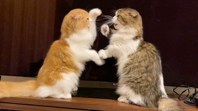 猫のけんか