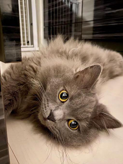 猫のぼんくん