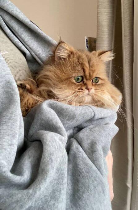 猫・抱っこ紐