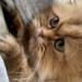 「猫さまお願い抱っこさせて~」そんな猫ラバーへご提案【抱っこ紐】ならOKかも!?