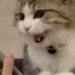 「文句猫」お話し上手で文句すら可愛い猫さん~愛嬌たっぷり大人気!