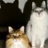 「猫を怒らせてはならぬ」病院に連れて行かれて激おこの猫さんが怖い…けど可愛い~