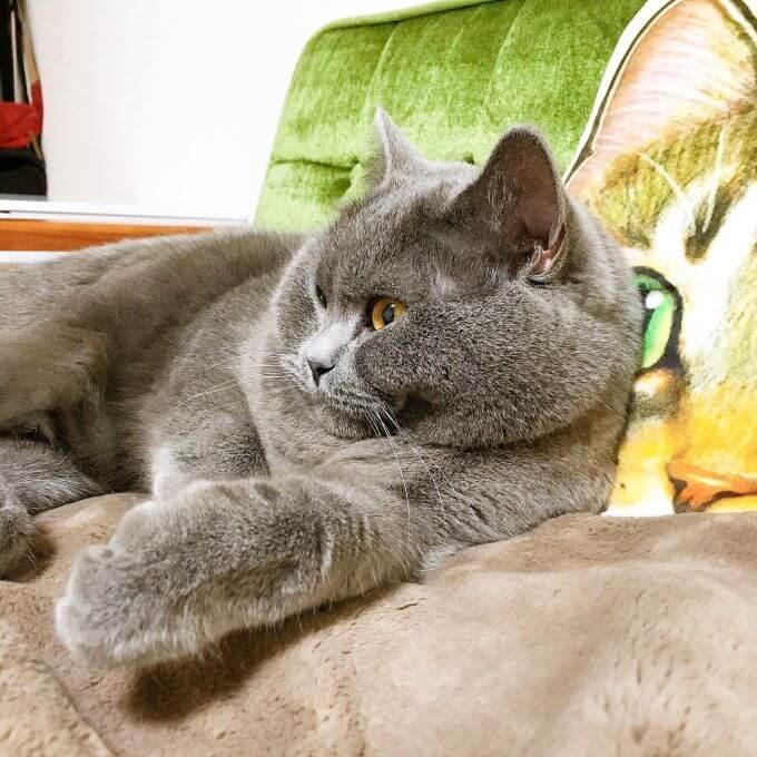 猫のグミさん