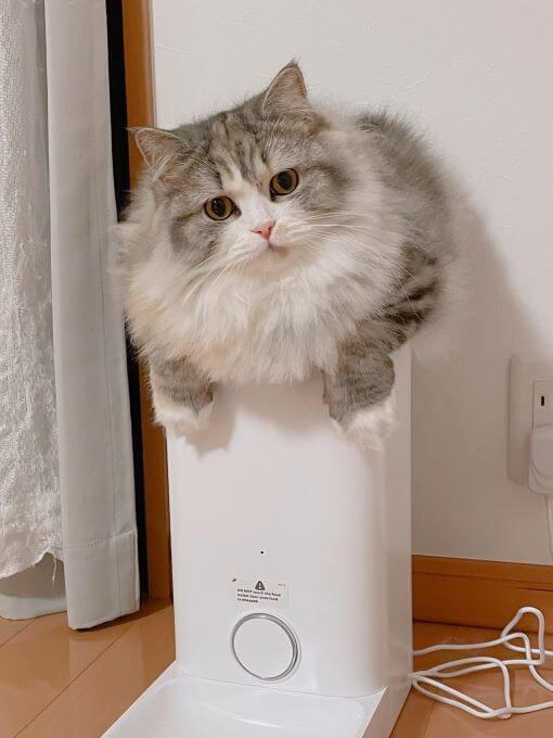 猫と自動給餌器