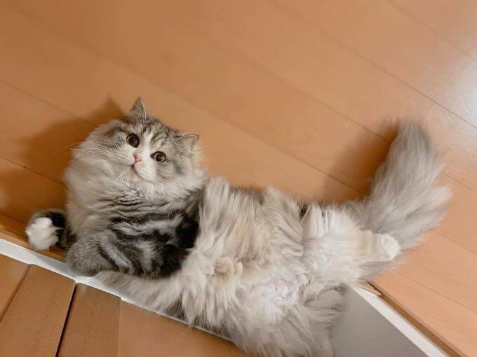猫のねむさん