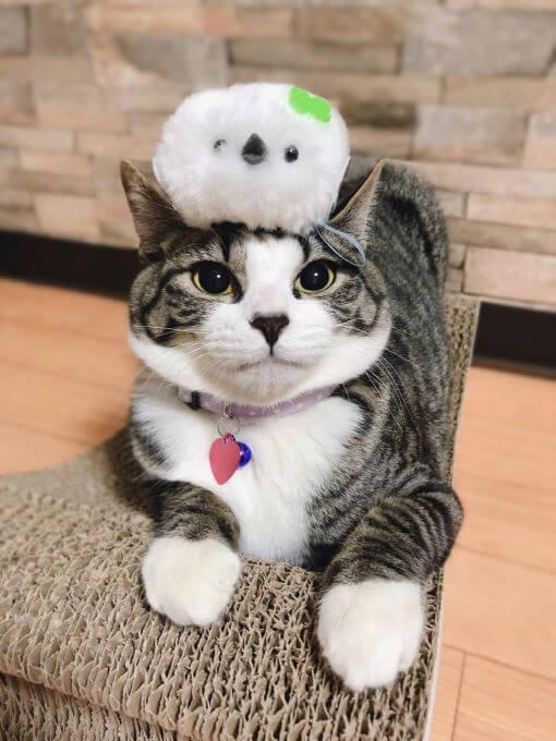 猫とシマエナガ