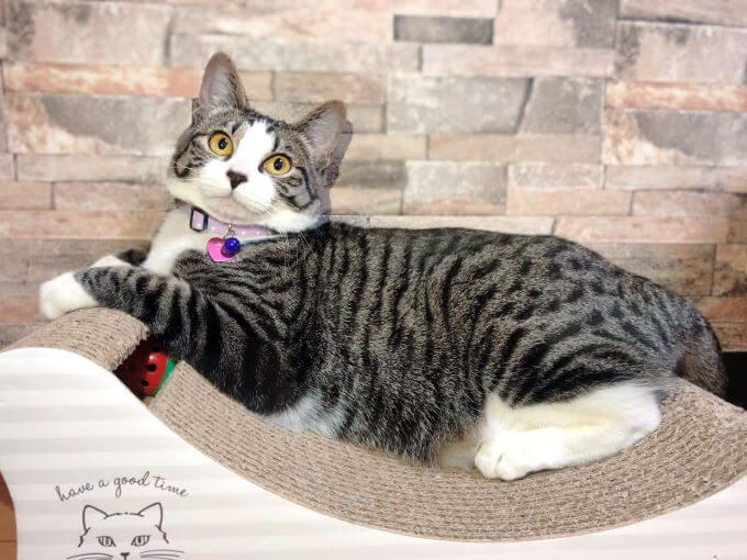 猫のロマちゃん