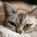 「2020年度一番読まれたのは?」猫ねこ部最新ニュース記事BEST10!