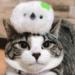 【猫とシマエナガ】まんまる×まんまるで可愛いがコラボしちゃってる猫さん発見!