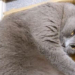 【渋かわ猫】チラッとこちらを見るだけで笑わせてくる猫さん…天才かな?
