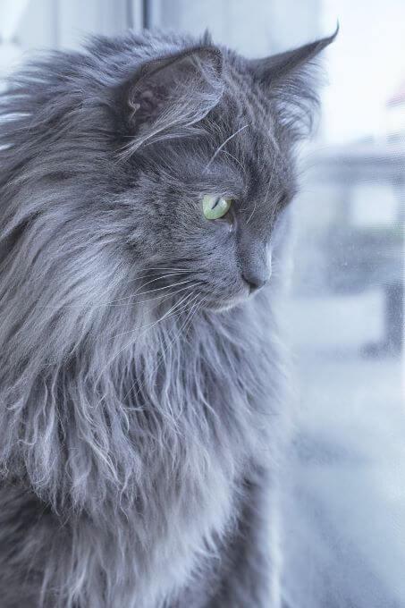 ハンサム猫さん