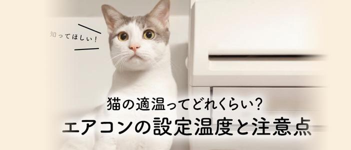 猫の適温ってどれくらい?エアコンの設定温度と注意点