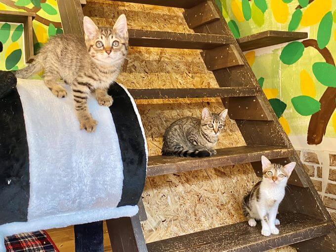 保護猫施設・笑にゃんこ王国