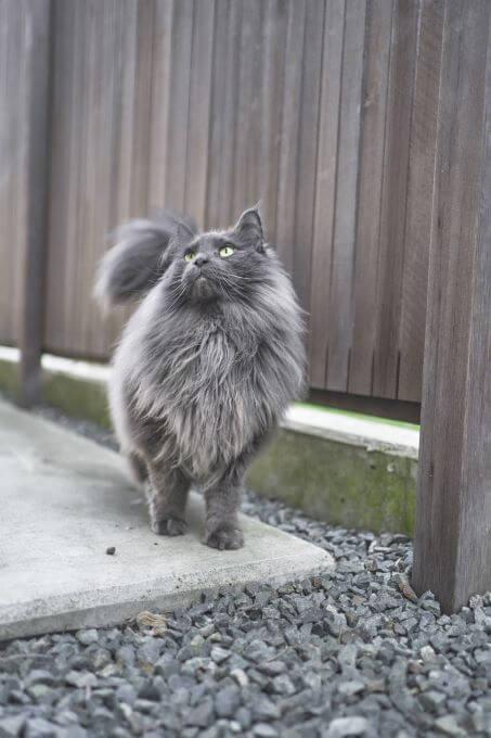 ハンサム猫