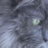 【イケメン猫】神々しいハンサムぶりが話題!ふさふさ美少年、現る…