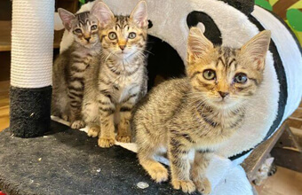 保護猫シェルター作曲「まいにち大好き」猫から飼い主へ猫目線メッセージソング!