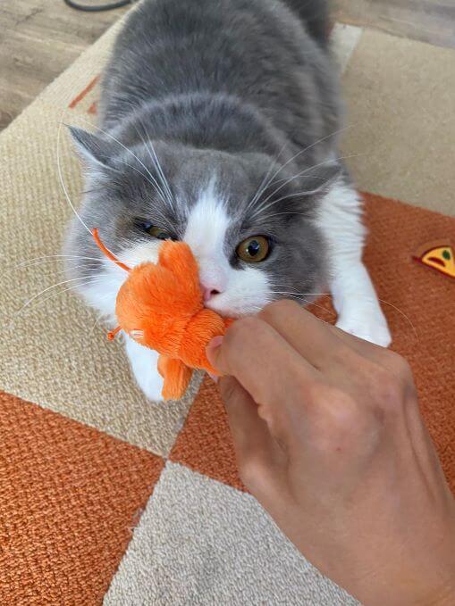 猫のつくねさん