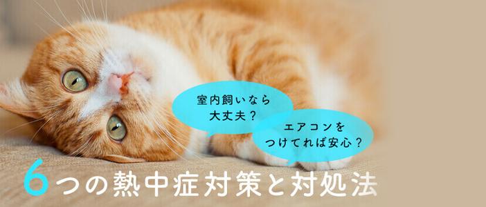 猫も熱中症になる?獣医師が教える6つの対策と対処法