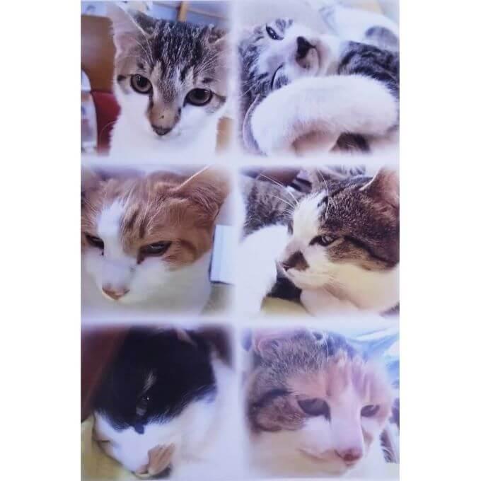 猫の長楽寺