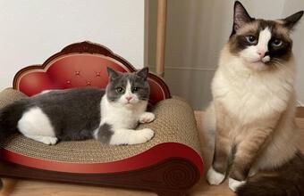 トイレ開けたら猫いてびっくり「先約ありにゃ」の仲よし兄弟猫さん!
