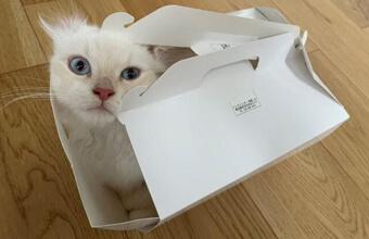 【子猫ご満悦~】絶対狭いのに満足そうな猫さんが可愛いと人気です