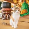 猫に会える長楽寺さんが写真展に!猫さんグッズもいっぱい~そごう大宮店