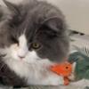 【癒し猫】9ヵ月坊やヌイグルミを持ち歩く!一生懸命お世話する姿が可愛いすぎ~