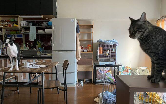 猫犬オカメインコ家族