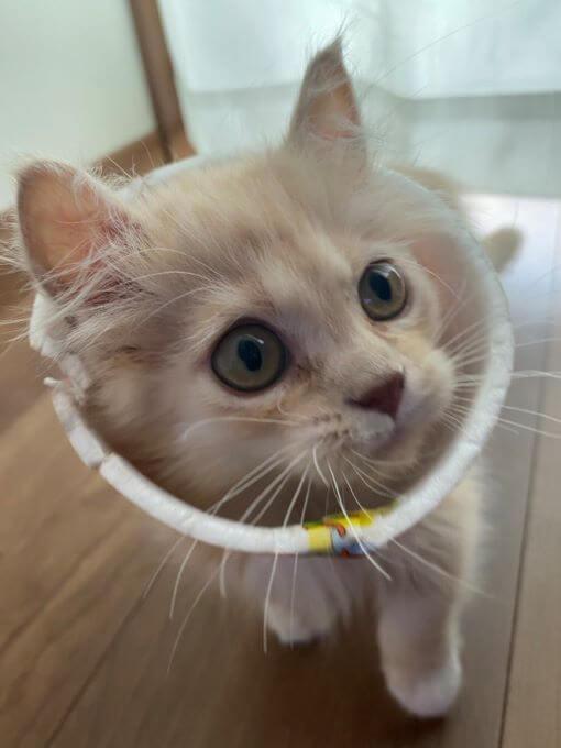 猫のべこちゃん