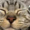 【すやすや猫】どアップ顔が間違いなくアイコン向きな猫さん発見~