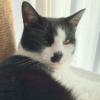 【元野良猫→現国王】蔵で生まれ今では一家の王に君臨するもふ猫さん