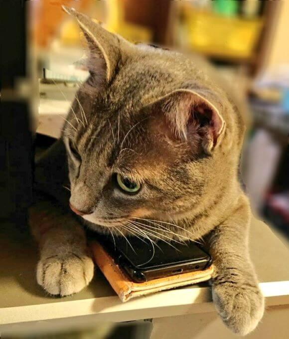 猫のねずみちゃん