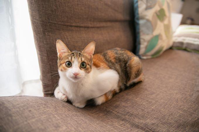 猫のマヨさん