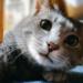 猫だけどねずみちゃん~小学校で暮らしてた甘えんぼの保護猫さん