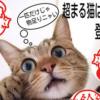 【癒され猫グッズ】じゃれあう2匹の猫がハンコになって登場!