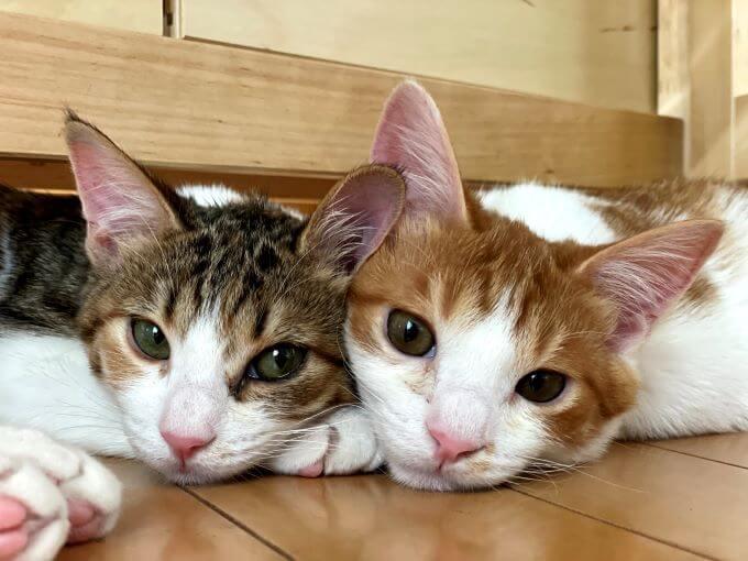 猫のツナマヨさん