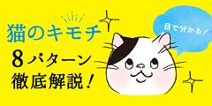 【獣医師監修】猫の目の8つの特徴と目で分かる猫の気持ち